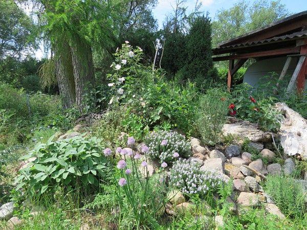 Unter Dem Bewuchs Befindet Sich Unsere Nach Suden Ausgerichtete Reptilienburg Naturnaher Garten Naturgarten Garten Pflanzen