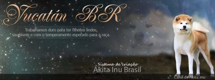 Capa para a fanpageYucatán BR, de: http://www.akitainubrasil.com.br
