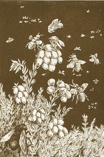 Bees and berries. Bees in flight and bees sitting in the fir tree branches #1875 #vintage #drawing.