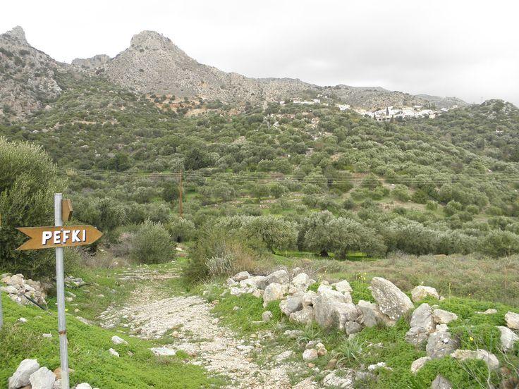 www.mistatoshouses.gr Pefki, Makri Gialos, Crete