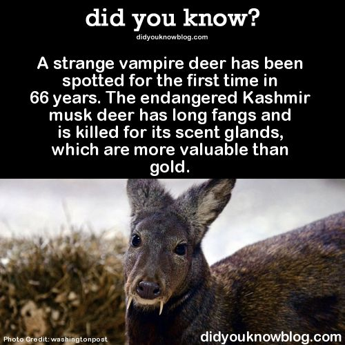 Deer did you know and vampires on pinterest