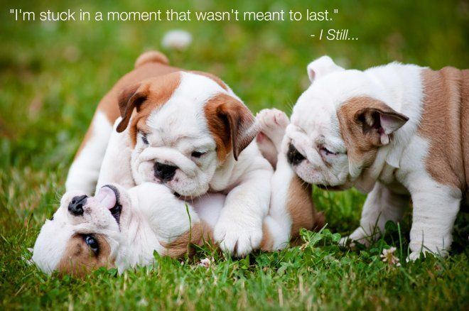 That Moment Backstreet Boys Lyrics As Told By Puppies Music