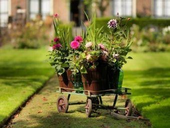 10 najładniejszych kwiatów cebulowych kwitnących w lecie