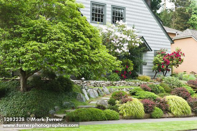 Front Yard Garden Anchored By Dogwood Rhododendrons