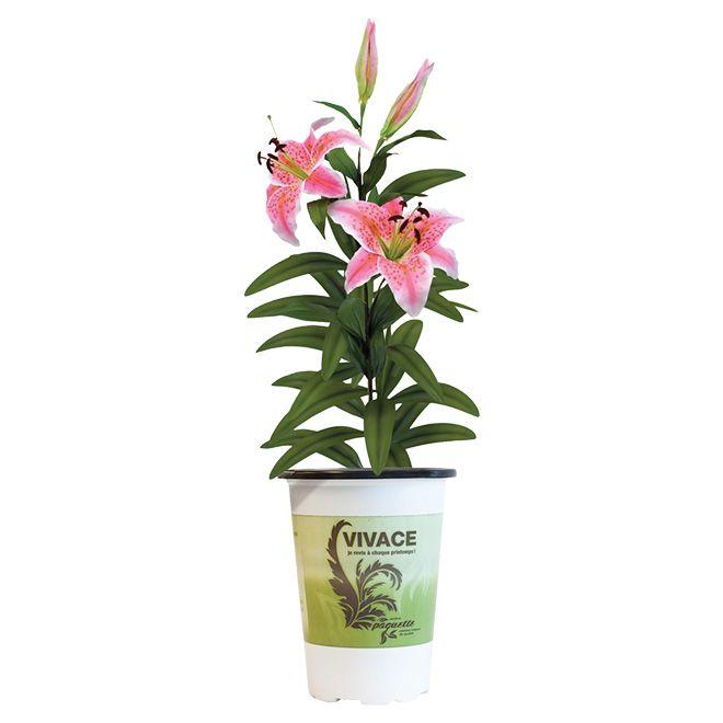 Vivace 5 fleurs vivaces et bisannuelles pinterest for Entretien jardin cahors