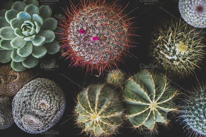 Colourful Cacti and Succulents by Rene Jordaan Photography on @creativemarket