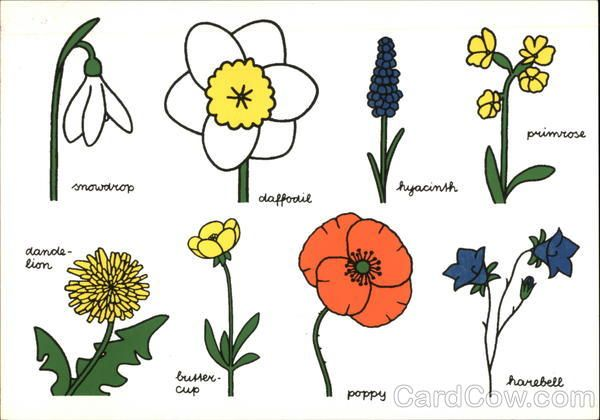 Drawings of assorted flowers