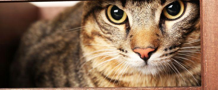 Un homme de la ville de Hamilton, en Ontario, est traité contre la rage après avoir été mordu par un chat porteur de la maladie.