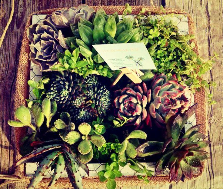 Composizioni con piante grasse - ifiorinellarete.it