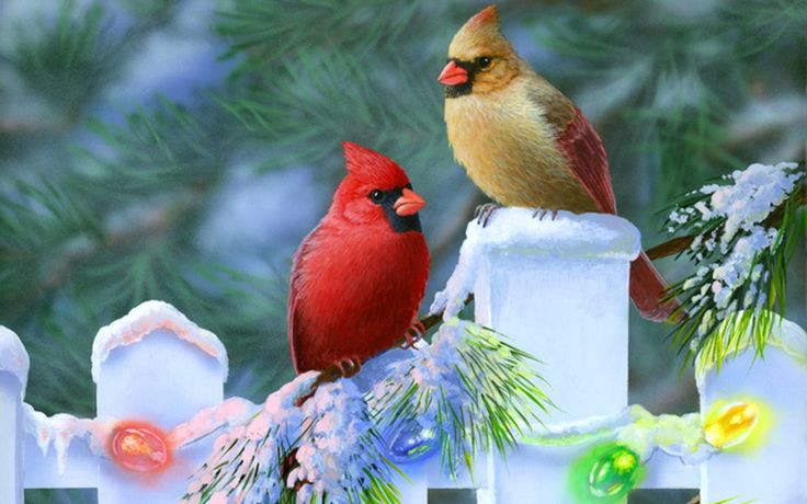 Christmas | Christmas-cardinals Wallpaper - Bird Wallpapers and pictures for ...