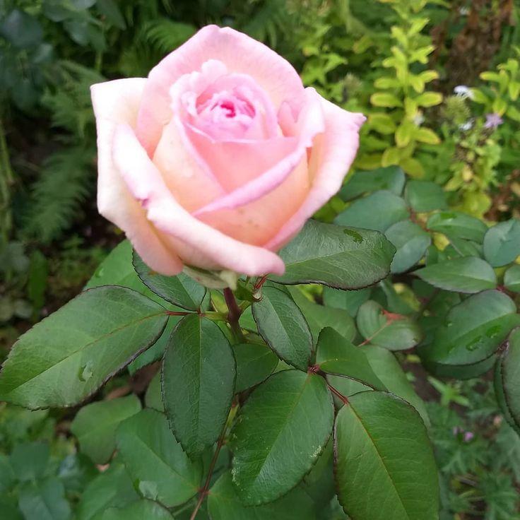 Für mich ist es ein Geschenk des Gartens, wenn um diese Zeit noch so eine feine…