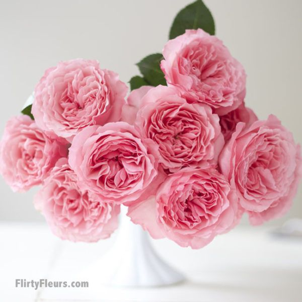 Roses In Garden: 214 Best Images About Roses For Cut Flower Industry On