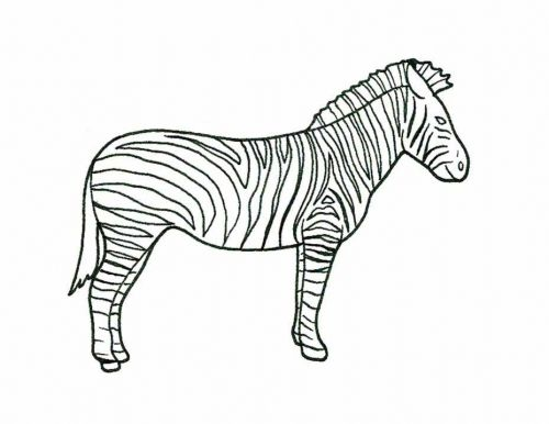 zoo animals coloring pages zebra - photo#26