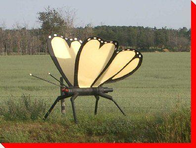 Butterfly - Pierceland, Saskatchewan