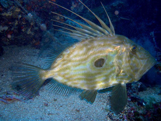 Isola del Giglio/Giannutri - under the sea