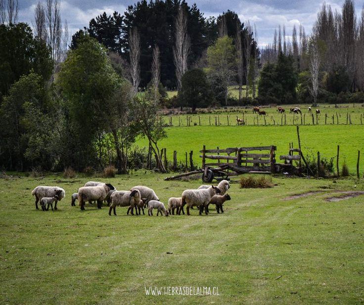 """www.hebrasdelalma.cl """"Con las Hebras de la lana de oveja y el Alma de las artesanas, nace Hebras del Alma."""""""