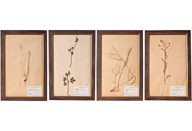 69 best Botanicals images on Pinterest