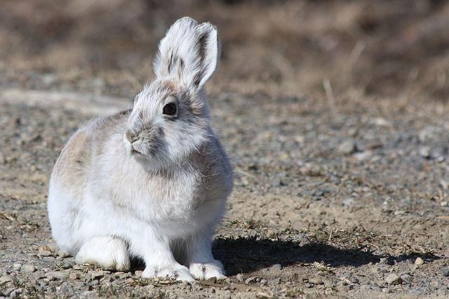 Rabbit Died Pregnancy Test