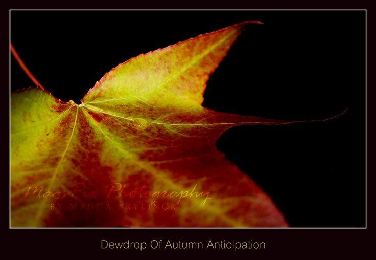 Challenge = Autumn