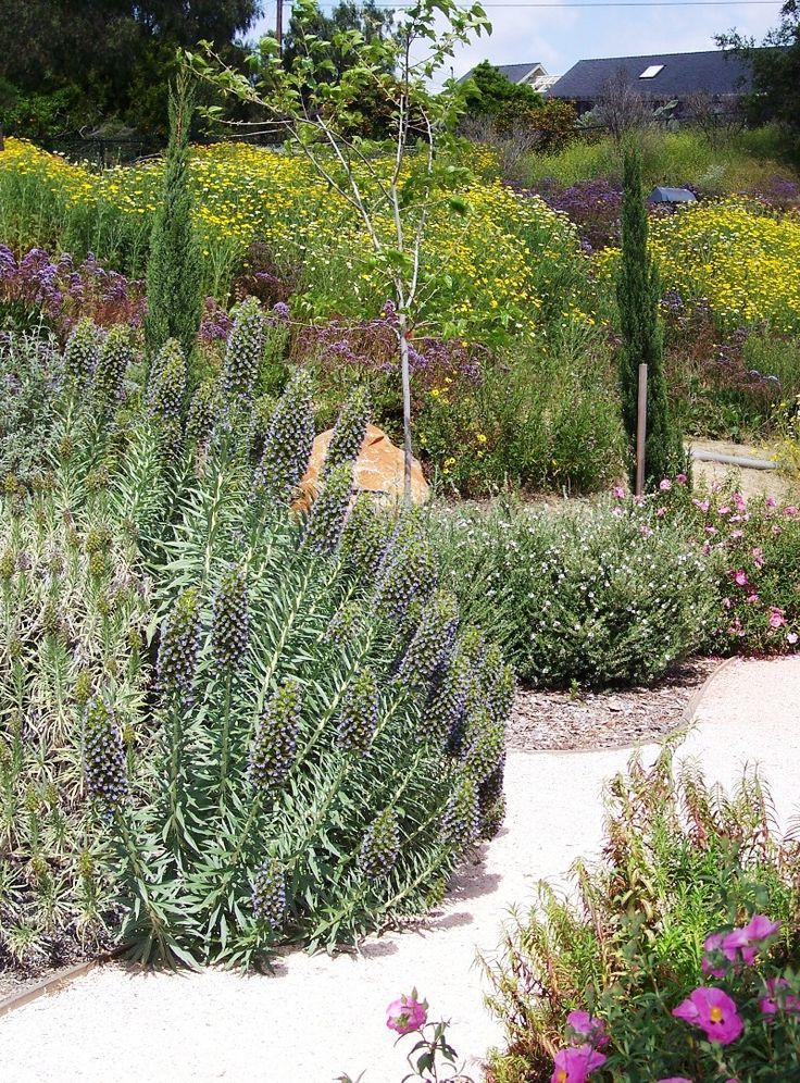 Top 10 Mediterranean Garden Designs                              …