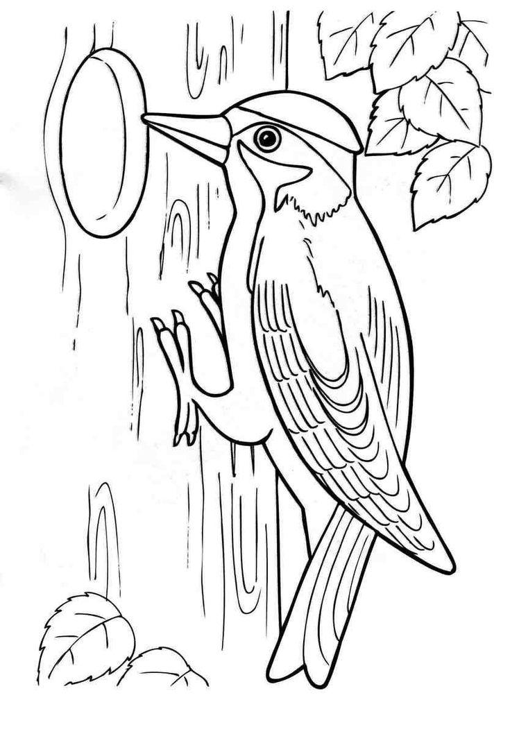 Раскраски лесные животные природа лесные животные дятел птица дерево