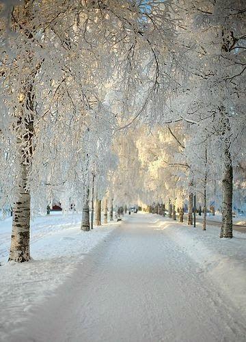 Beautiful winter - Holiday$pots4u