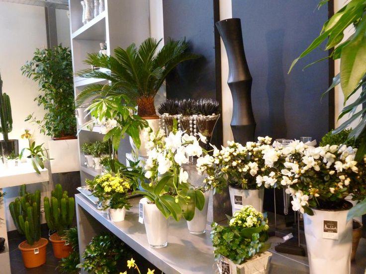 entreprise fleuriste arras arnaud lechantre 62000 kwiaciarnie pinterest fleuristes. Black Bedroom Furniture Sets. Home Design Ideas