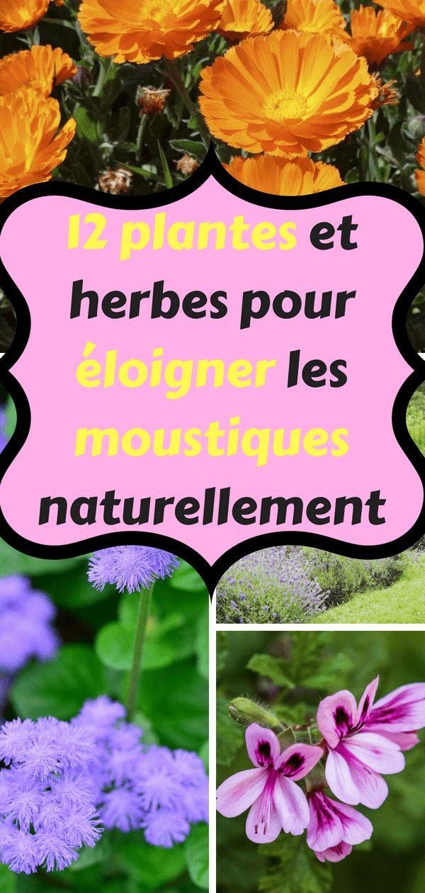 12 plantes qui repoussent naturellement les moustiques jardins pinterest. Black Bedroom Furniture Sets. Home Design Ideas