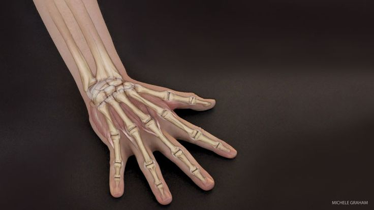 Wrist Anatomy: Protect Your Wrists in Yoga Practice | Prevent Injury