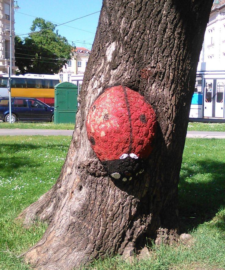 Street art, Szeged - Katicabogár / Ladybird