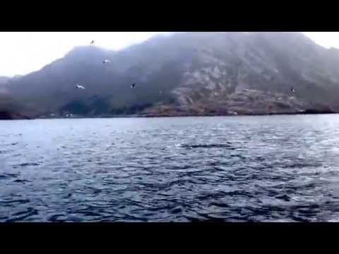 Spekkhoggere Orca in Norway by Vermelia Småturarlag Lofoten 2014 - YouTube