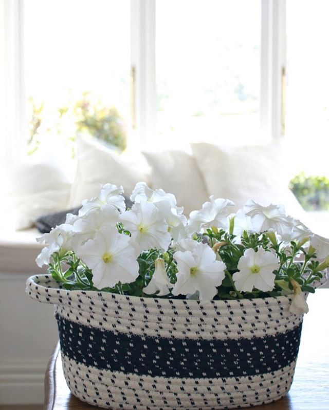 White petunias in a blue and white basket.