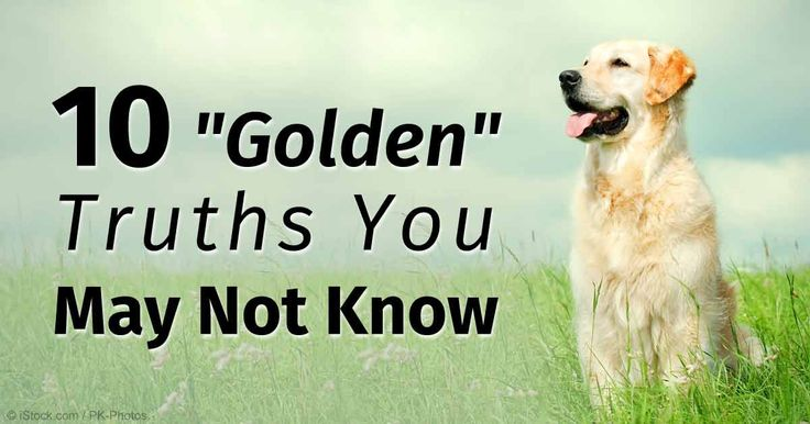 The Golden Retriever is consistently ranked as one of the top 5 most popular dogs in the US,  as they are easy to train and gentle with children. http://healthypets.mercola.com/sites/healthypets/archive/2015/07/24/golden-retriever-facts.aspx