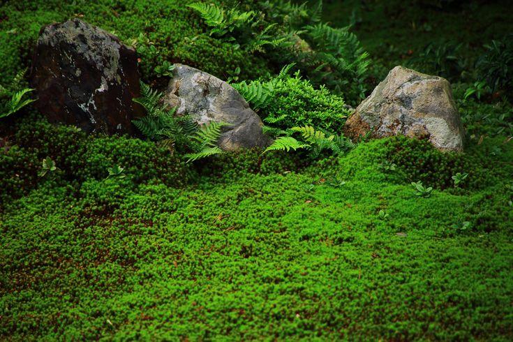 Zelený mech a kapradina v Penthouse Garden