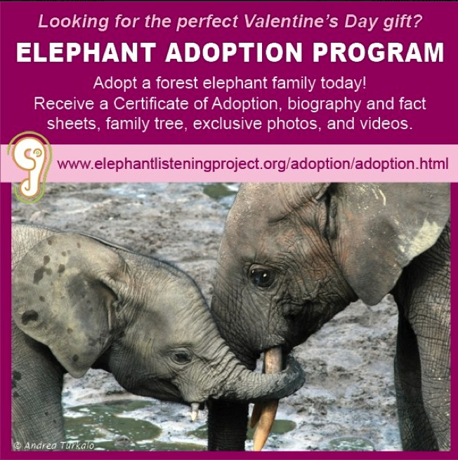 Adopt an elephant for Valentine's Day!  The Elephant Adoption Program allows you to become involved in elephant conservation by supporting the Elephant Listening Project. #cornellbirds