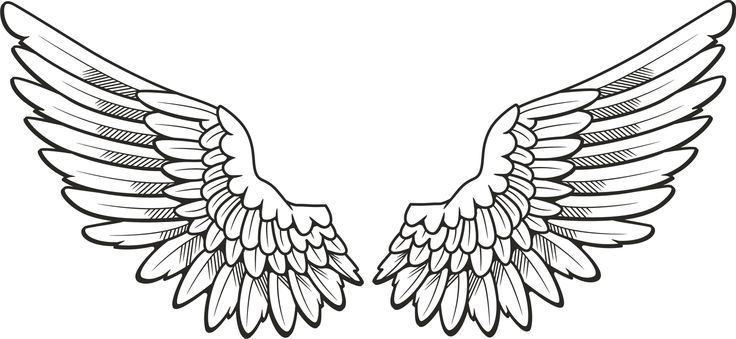 Skellig By David Almond Book Review Angel Wings Clip Art Wing Tattoo Designs Wings Tattoo