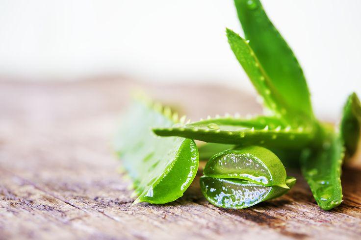 L'Aloe gel è un rimedio naturale, utile per lenire la pelle irritata dal sole o altre fonti di calore. Scopriamo come agisce e come ottenerlo in casa!