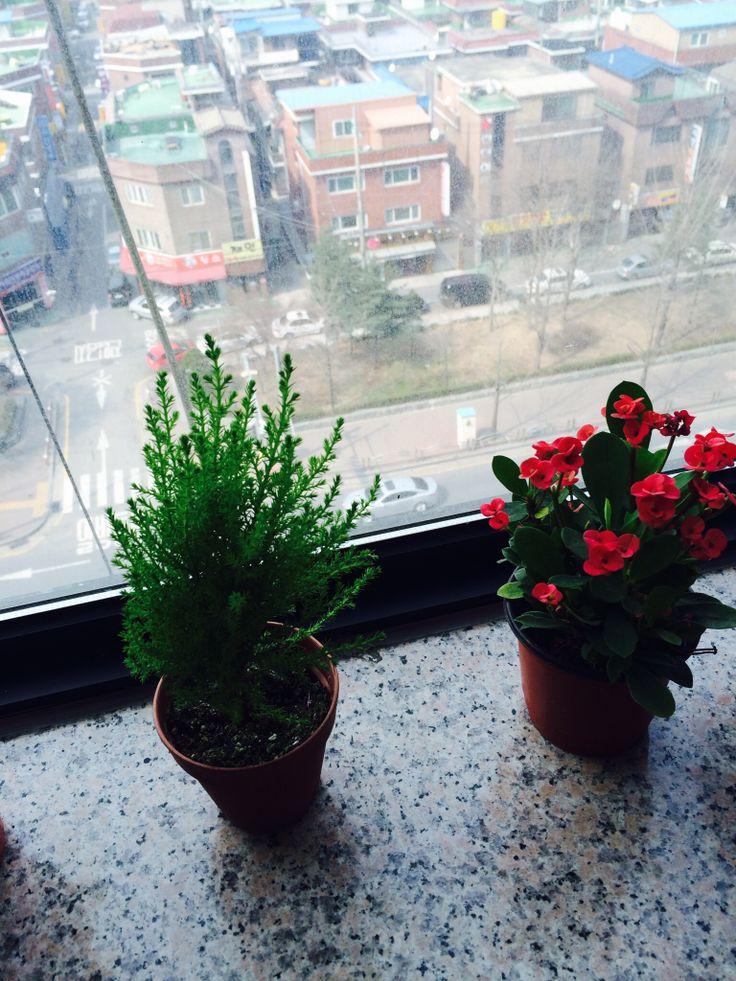 flower in deemain studio