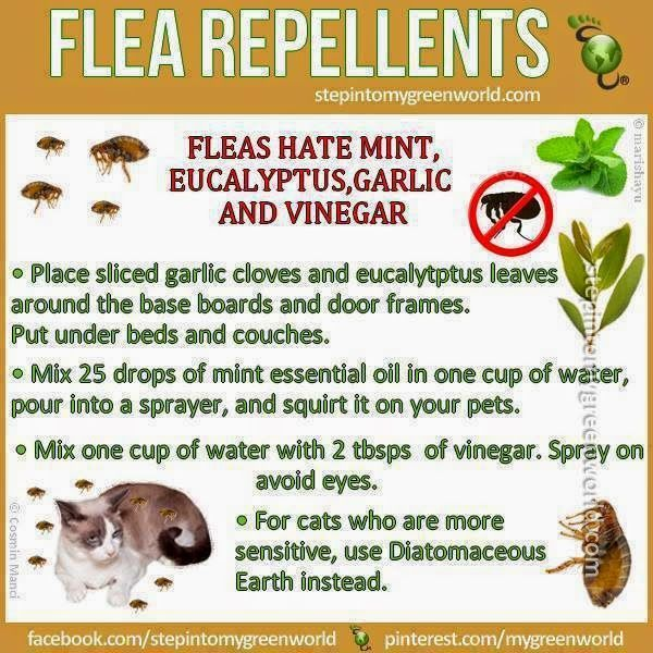 Flea Repellents
