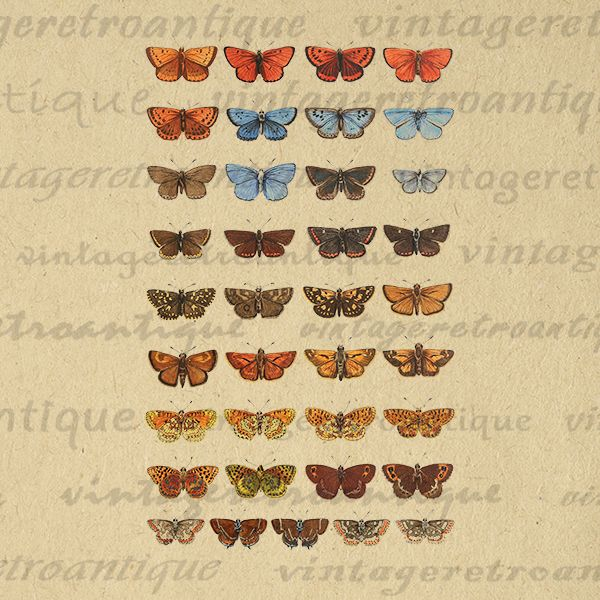 Printable Image Butterfly Collage Sheet Download Color Digital Graphic Vintage Clip Art Print 300dpi No.3912 @ vintageretroantique.com #DigitalArt #Printable #Art #VintageRetroAntique #Digital #Clipart #Download