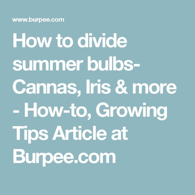 How to divide summer bulbs- Cannas, Iris & more - How-to, Growing Tips Article at Burpee.com