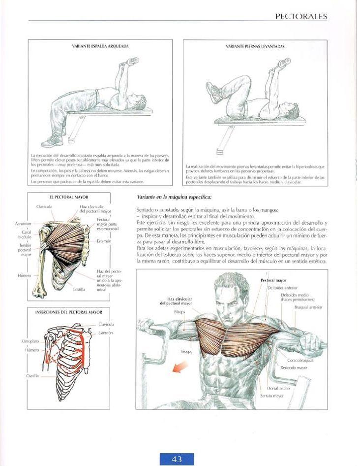 241 mejores imágenes de Anatomy en Pinterest   Anatomía humana ...