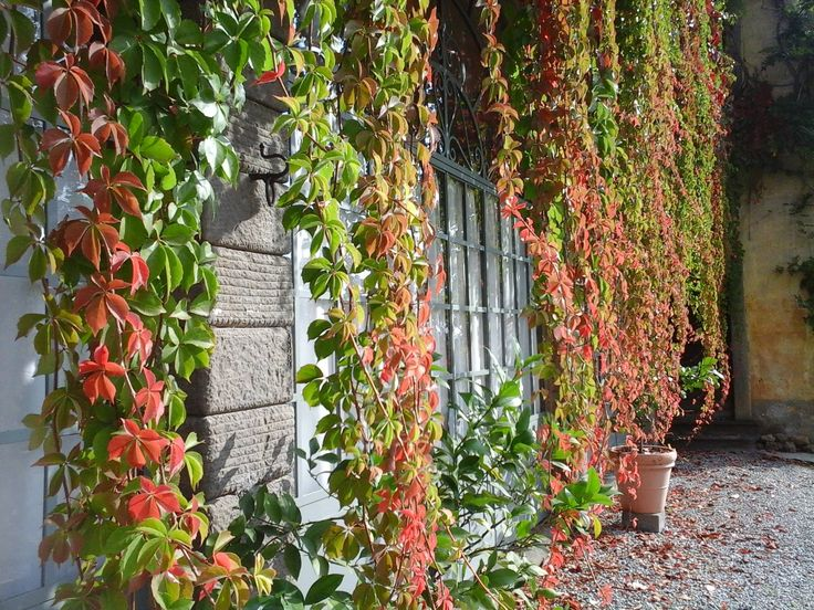 cancelli idee porta giardino ideale : 78+ idee su Giardino Di Ghiaia su Pinterest Ghiaia da giardino ...