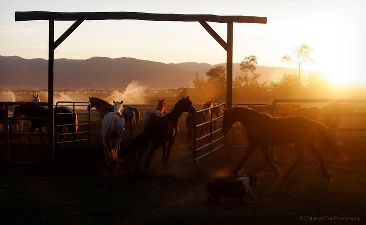 Ranch horses.   Photo by catherinecoephotography.com
