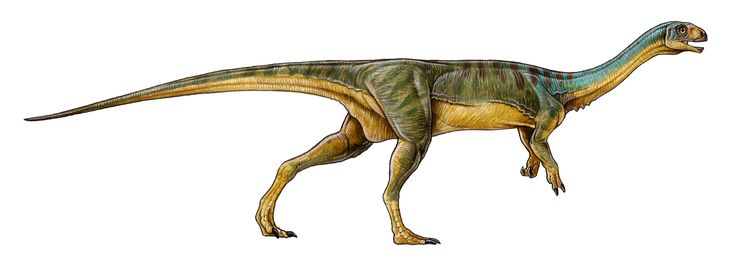 It's an unusual hodgepodge of features that can tell us something about dinosaur evolution.