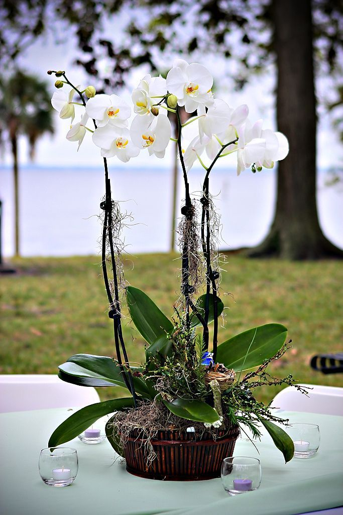 Best images about japanese themed event ideas on