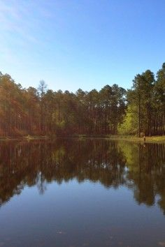 17 Best Images About Mississippi Magnolia State On