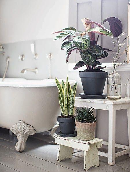bathroom flora