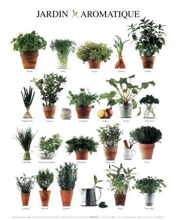 17 mejores im genes sobre especias hierbas y otros for Cultivo de plantas aromaticas y especias