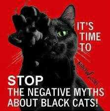 Or I'll put a curse on you. Most of my cats have been black cats, and I love them.